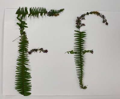 ferns and flowers Ff