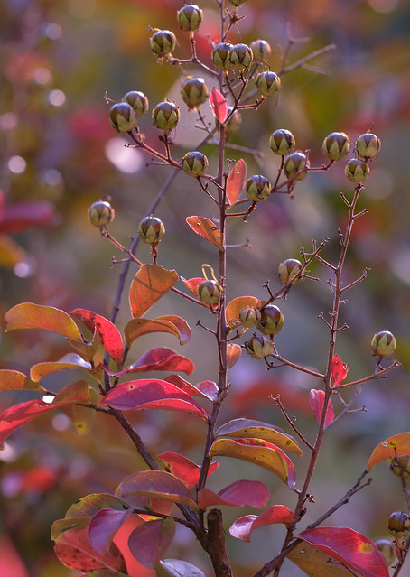 The Colors of Autumn 7