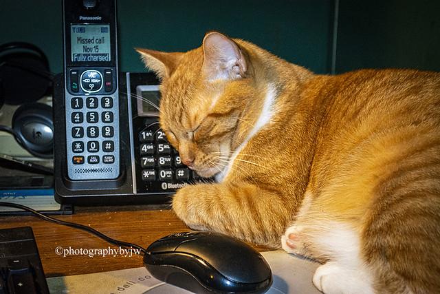 Saturday Assistant Cat Happy Caturday