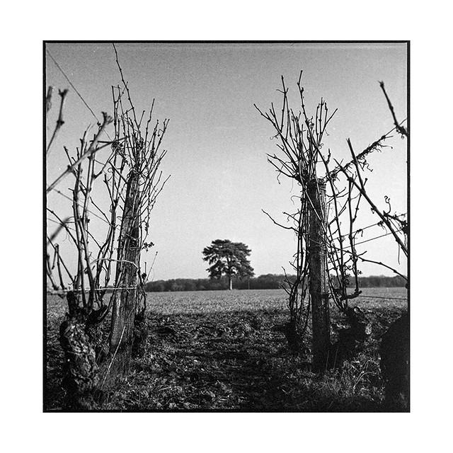 lone tree 2 • couchey, burgundy • 2019