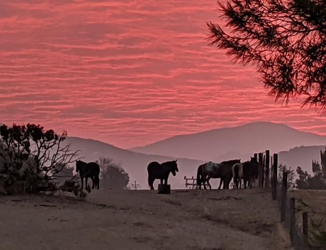 sunrise in Agua Dulce