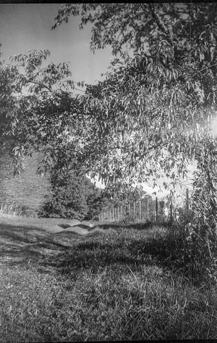 treeforms pathway grasses fence latelight nearsunset biltmore biltmoreestate asheville northcarolina brownietargetsix20 rolleisuperpan200 hc110developer boxcamera 6x9 620camera 120film film analog converted blackandwhite monochrome monochromatic landscape