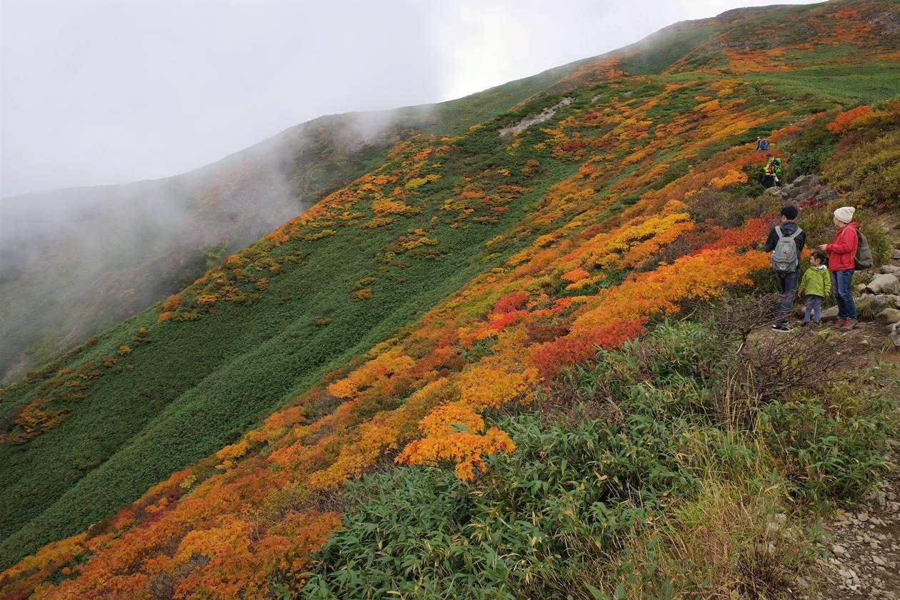 月山 稜線の紅葉