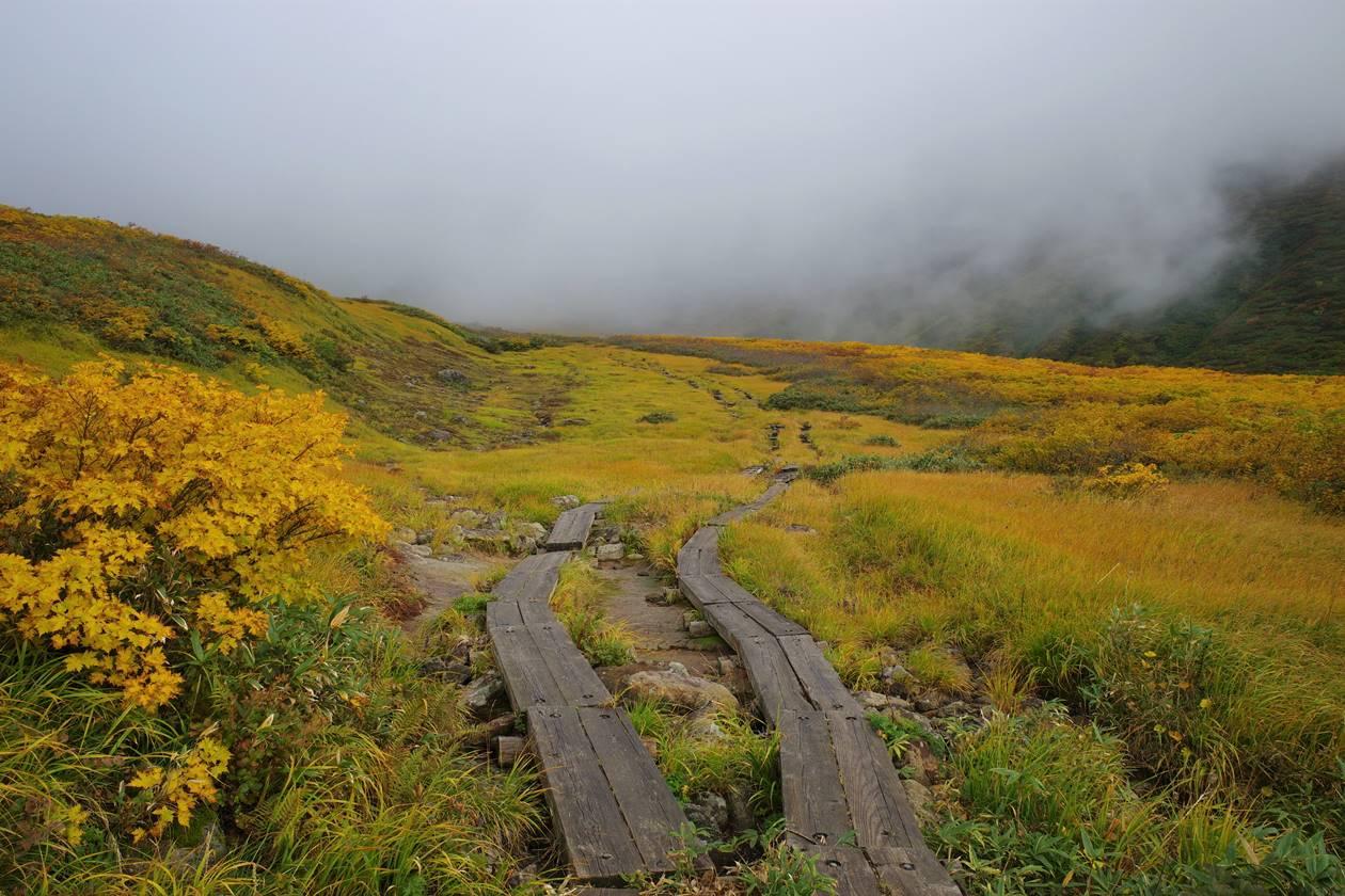 月山 木道と草紅葉