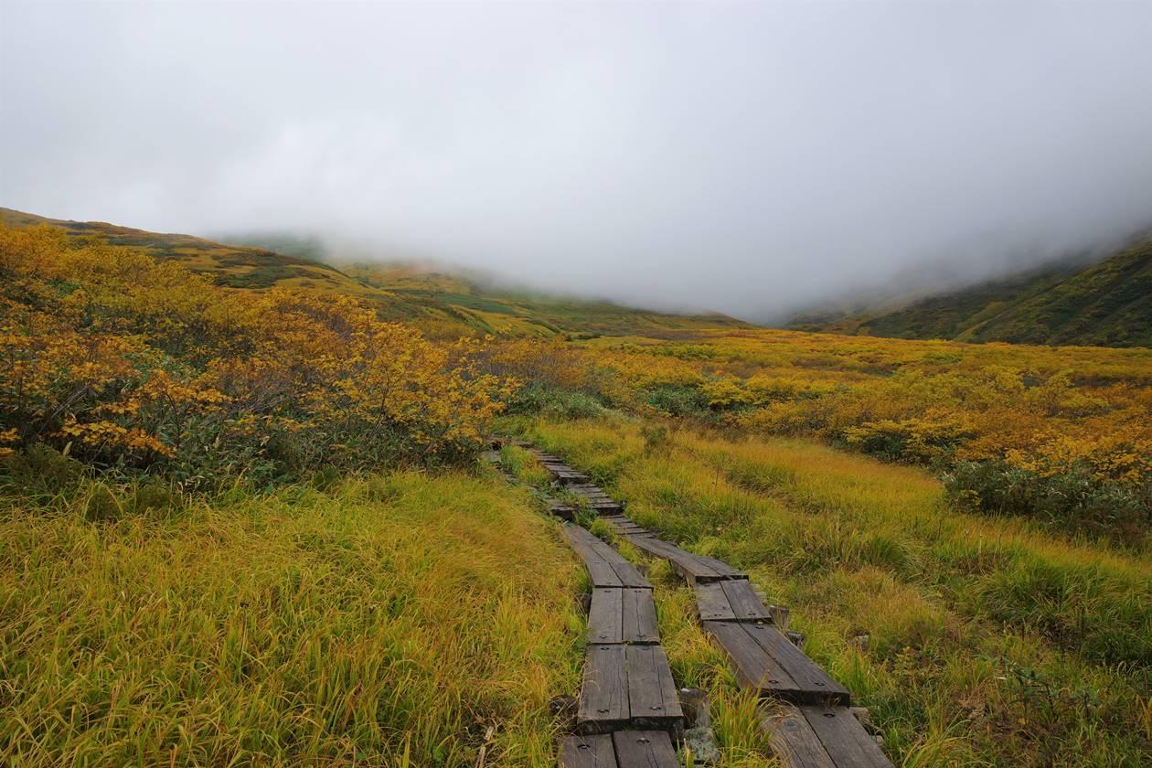 月山 湿原の草紅葉