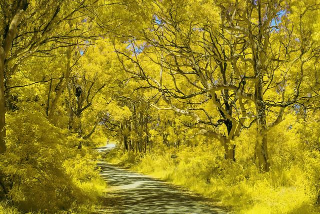 Through the yellow