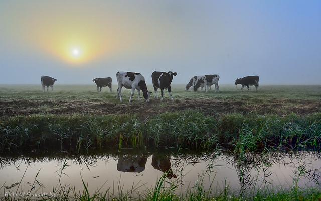 Early Morning in a Dutch Polder