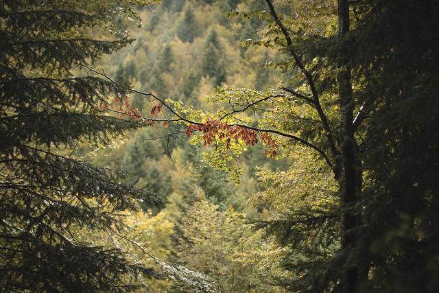 Bosque de Irati III