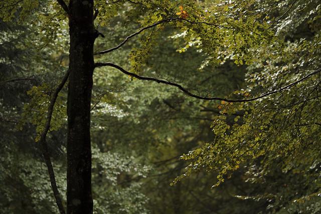 Bosque de Irati IV