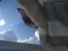 Good morning, Moes. #cats #CatsOfInstagram #catsitting #clouds