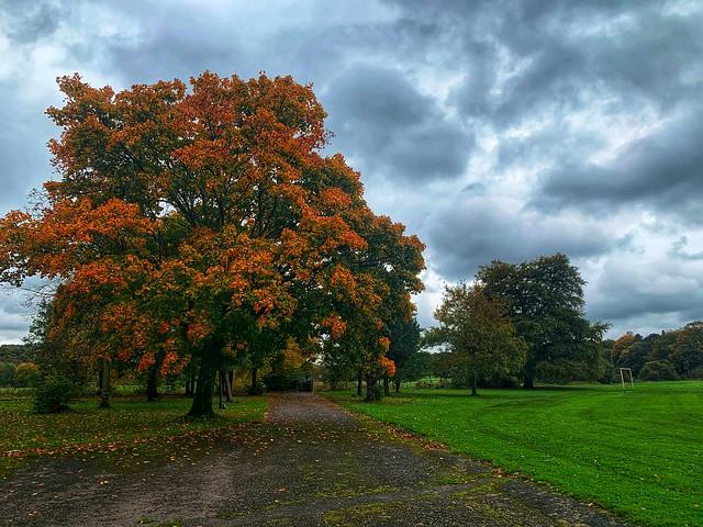 The faraway tree     -     Burnley district