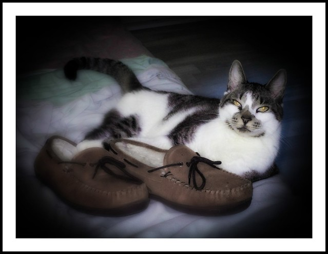Rascal and His Slippers