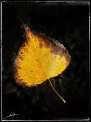 Hojas de otoño 🍂...     Autumn leaves🍂 ...