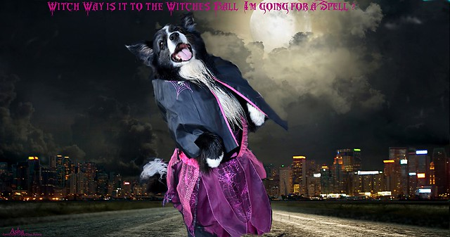 Witch way to the Witches Ball