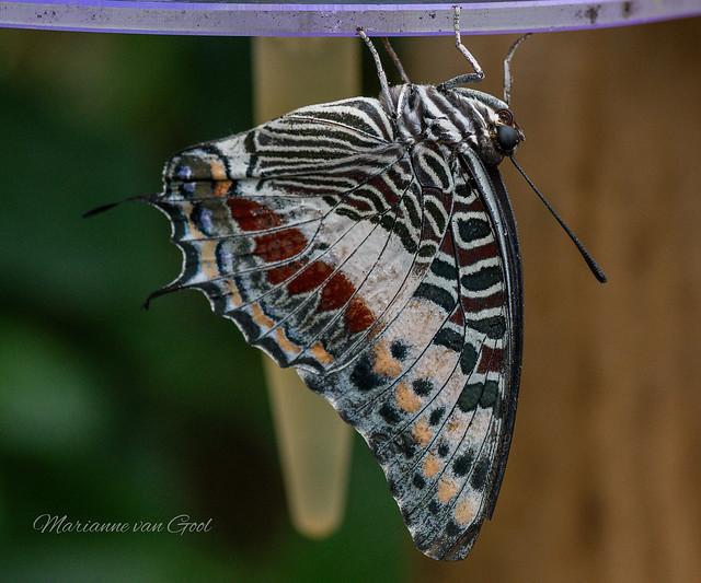 Klein Costa Rica 485