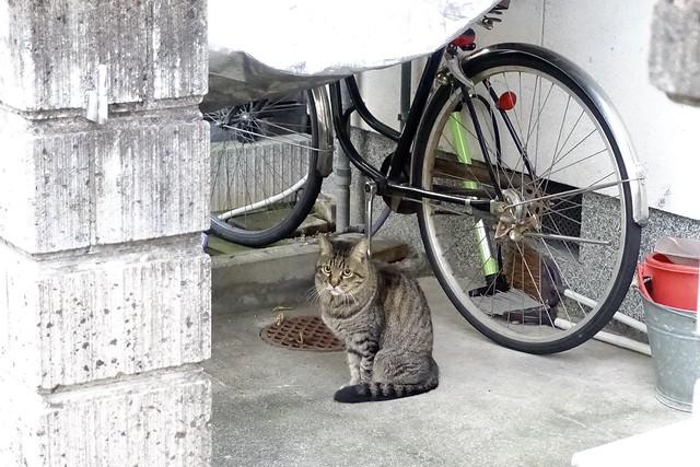 Today's Cat@2020ー10ー10