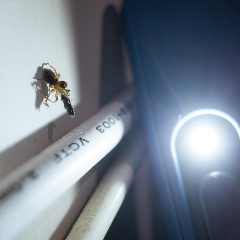 蠅虎|GR3小花模式