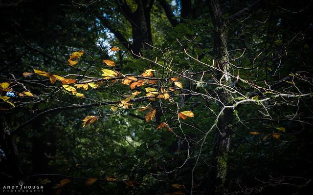 Autumnal encroaching