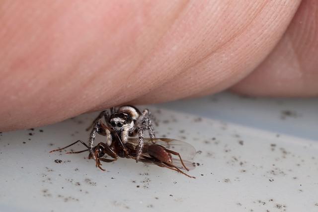 The Ant Slayer, Pt. 5 - _TNY_2326