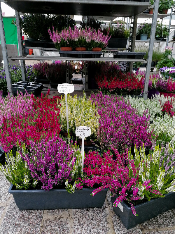 Flores en el mercado de Brujas II
