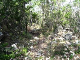 Après le ruisseau en RD de la Figa Bona sur le chemin du Carciara aval (HR21)