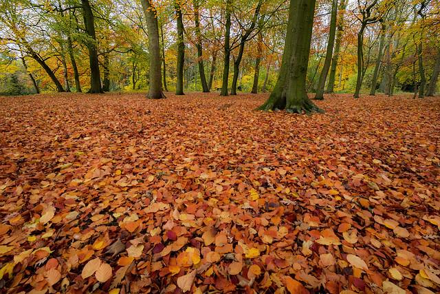 Sefton Park autumn