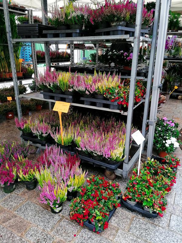 Flores en el mercado de Brujas IV