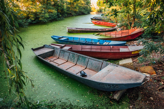 Boats in the water covered with algal bloom