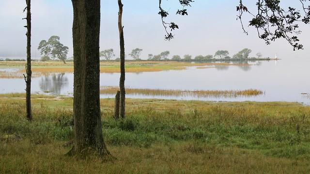 Nolhagaviken Nature Reserve VII