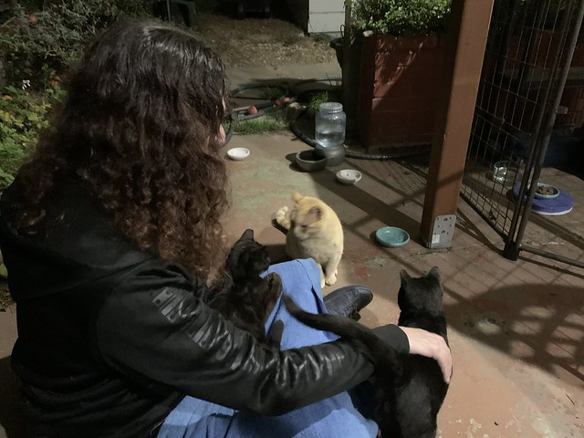 Three Kitties