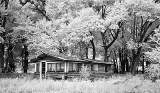 the cabin in the grove - infrared