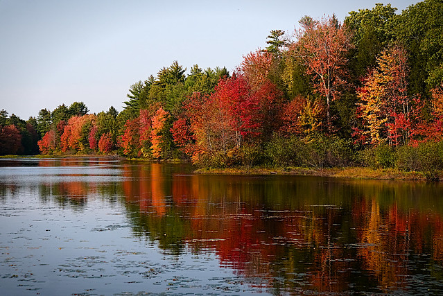 Exeter River Maples 10-10-20