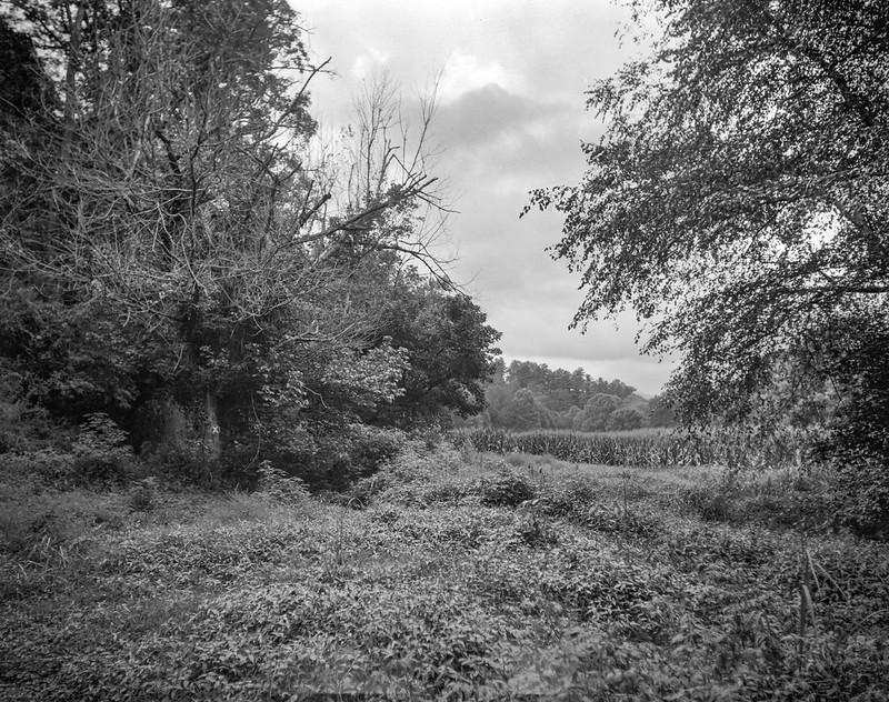 2nd scan, landscape at Biltmore Estate, distant cornfield, Asheville, NC, Graflex Crown Graphic, Graflex Optar 90mm f-6.8, Bergger Pancro 400, HC-110, 8.15.20