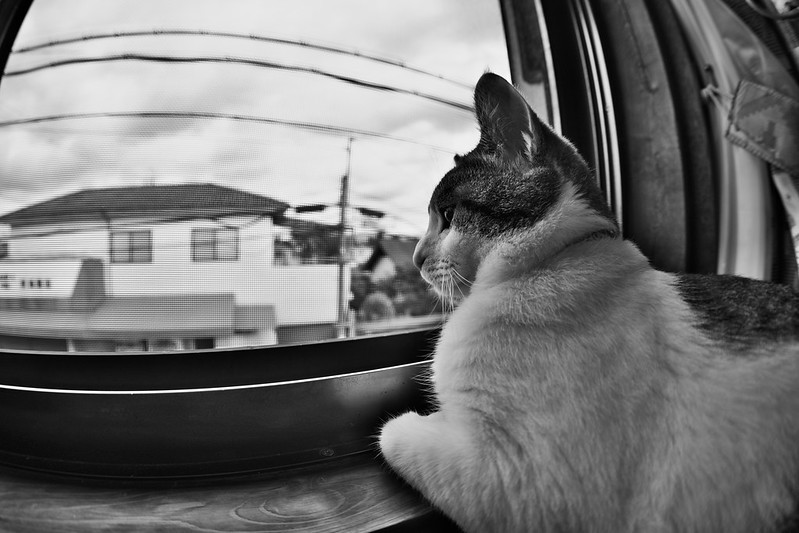 A house cat with a fisheye lens.