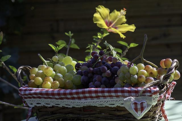 Fleurs et raisins
