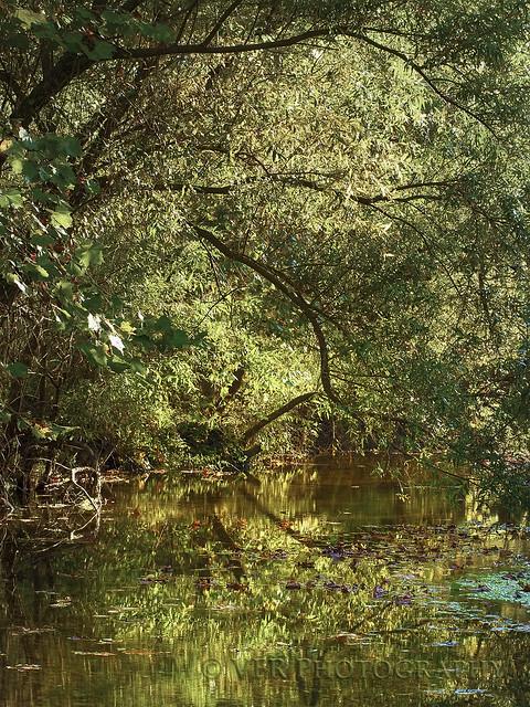 Locust Creek