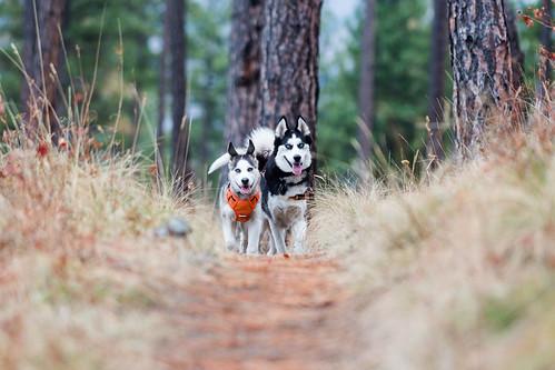 Samson and Stella