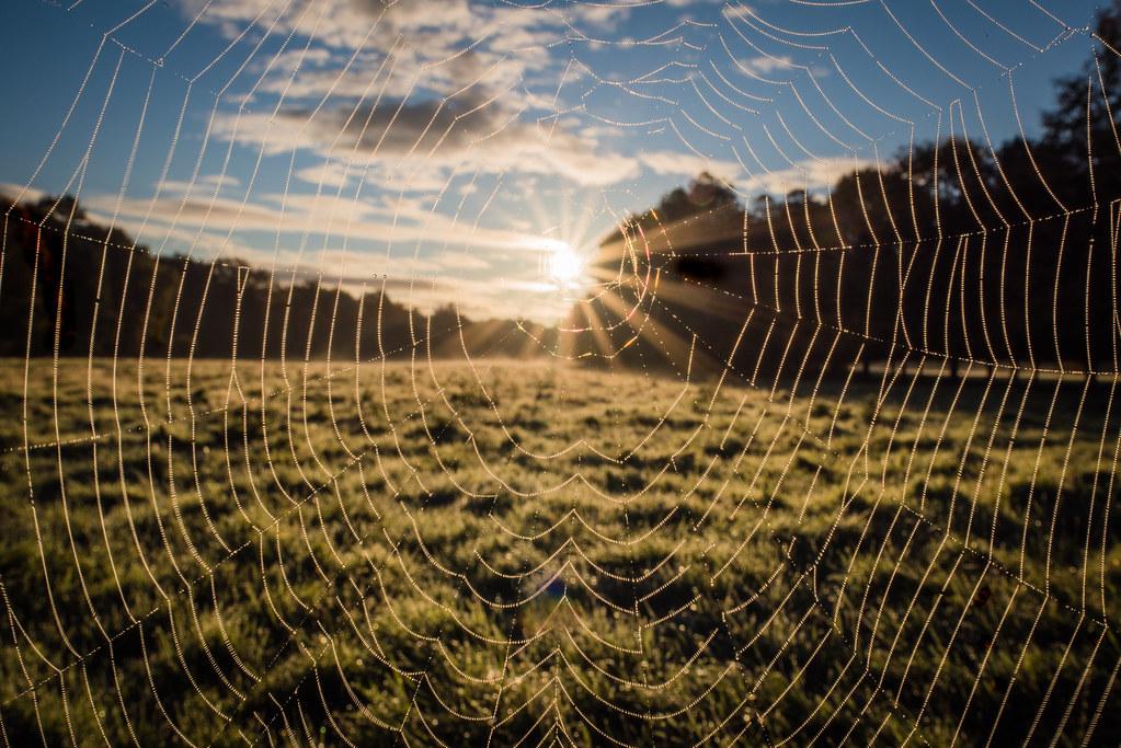 Spider's Sunrise