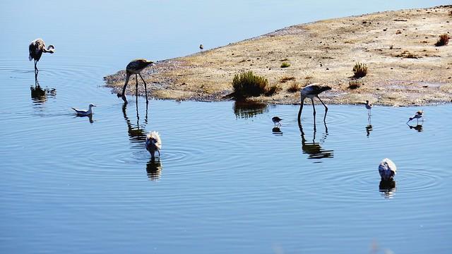 Lagunas malagueñas!!!