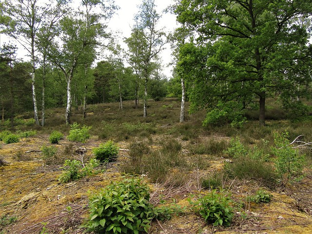nature surrounding Bolderberg in Heusden-Zolder