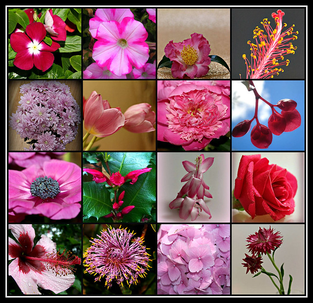 Pink Flowers collage #3