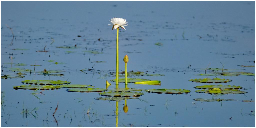 McMinns Lagoon Reserve, Darwin Rural Area, Northern Territory, Australia