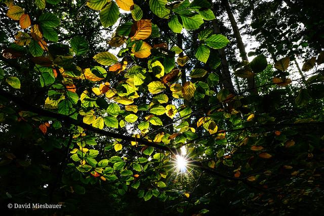 Illuminated leaf's