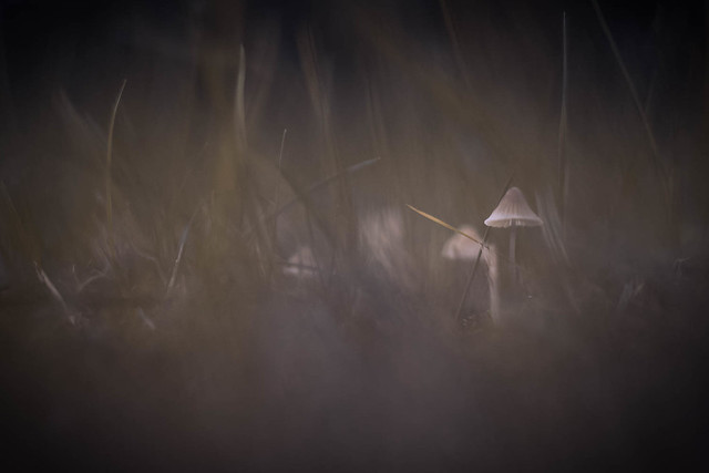 Mushroom Tales 2020  #5