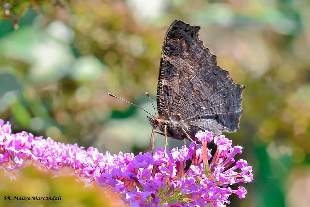 Fauna e flora dell'Adda