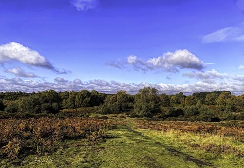 jan130 autumn2020 sunshine landscape suttonpark suttoncoldfield englanduk coth5 ngc npc