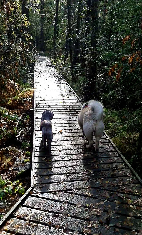 Jippy och Rufus