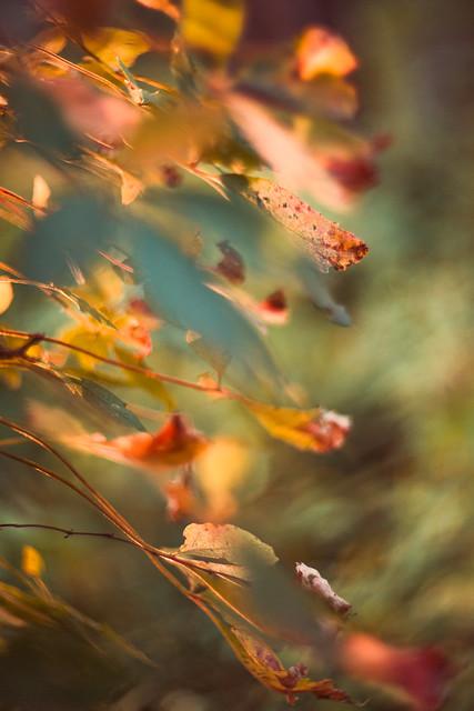 Autumn Leaves 2b