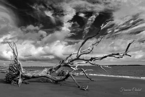 driftwood driftwoodbeach ilovedriftwood bigtalbotisland bigtalbotislandstatepark blackwhite clouds cloudysky clouddrama nikond810 beach beacheslandscapes floridastateparks floridabeaches landscapephotography landscape ocean jacksonvillefl nature deadwood