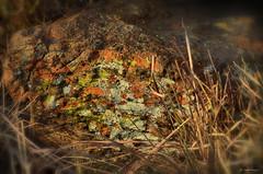 Lichen in the last light